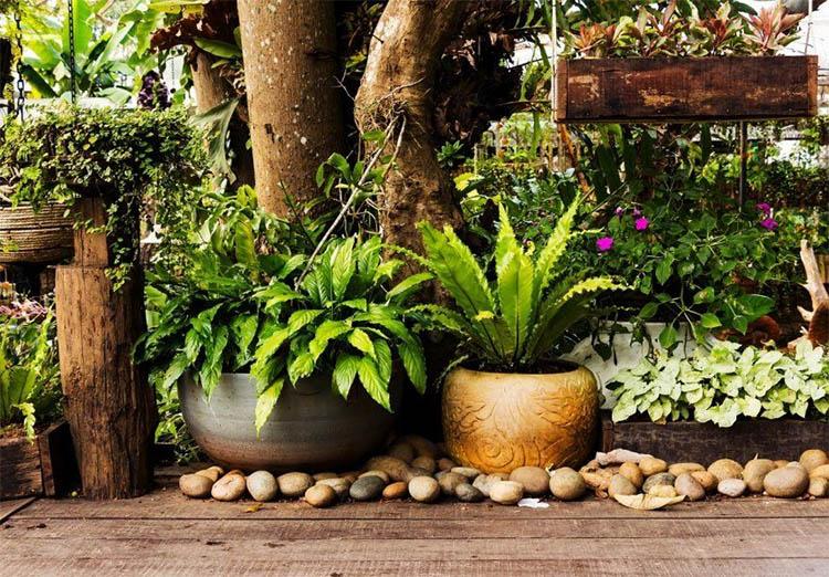 consejos jardin